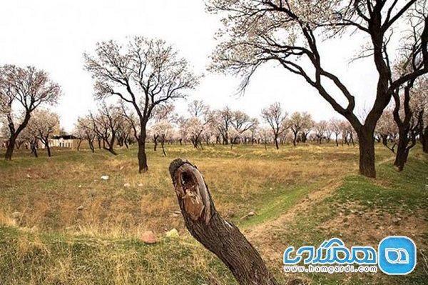 کوشش همه سازمان ها برای حراست از باغستان قزوین