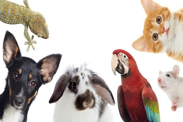 چرا نباید به حیوانات، مواد استریل کننده بزنیم؟