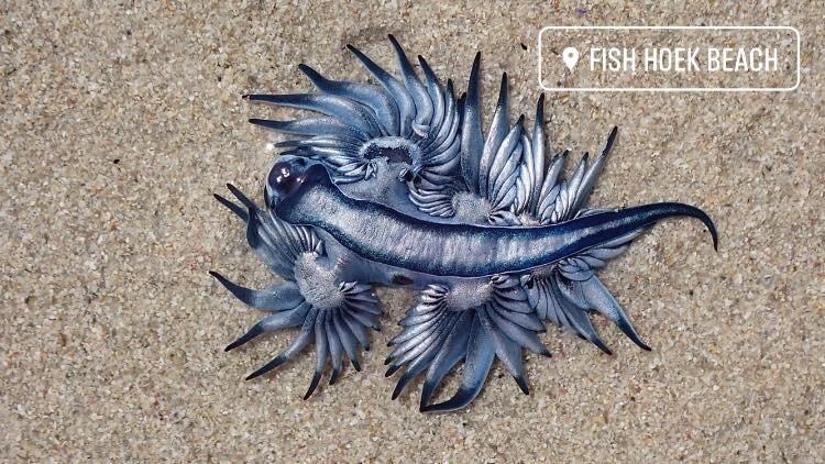 زیباترین قاتل اقیانوس در آفریقا