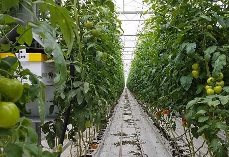 سیاست سازمان منطقه آزاد ارس بر پایه توسعه کشت گلخانه ای پایدار است ، صادرات محصولات منطقه آزاد ارس به روسیه