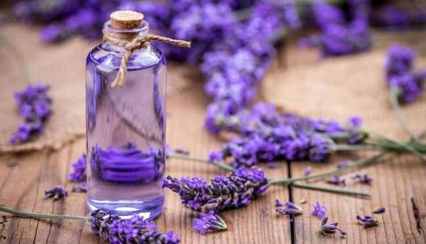 خواص روغن اسطوخودوس؛ 34 خاصیت زیبایی و درمانی