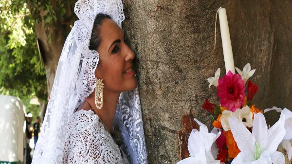 ازدواج 70 زن با درختان در اعتراض به جنگل زدایی